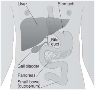 Bile Duct Cancer Treatment India,Bile Duct Diagnosis,Bile Duct Cancer, Bile Duct Cancer Treatment