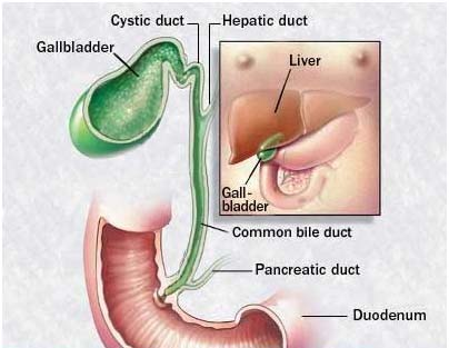 India Surgery Gallbladder Cancer,Cost Gallbladder Cancer, Gallbladder, Gallbladder Cancer Treatment