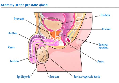 India Surgery Prostate Cancer, India Prostate Cancer, Prostate Surgery