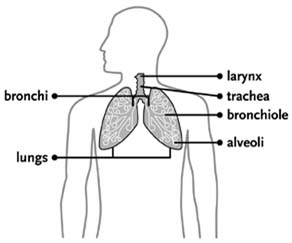 India Surgery Lung Cancer, Lung Cancer Treatment, Lung Cancer, Lung Cancer
