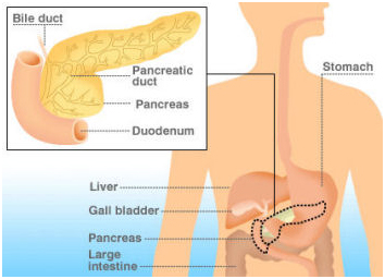 bile duct disease burden definition