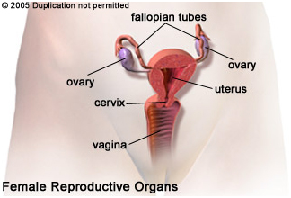Cost Tubal Reversal, India Surgery Tubal Ligation Reversal Surgery