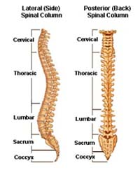 Back Pain Surgery India, Neck Pain, Spinal Pain, Back Strain, Spinal Stenosis