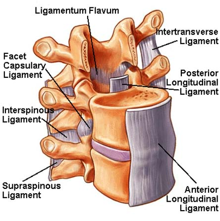 Lumbar Laminectomy Treatment India, Medications India, Treatments India, Disorders India, Vertebral Discs India